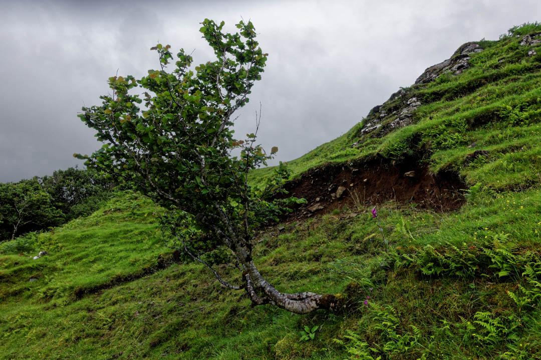 Castle-Ewen-Fairy-Glen_010_DxO-smart-copy.jpg